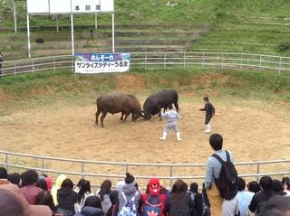闘牛2.JPG